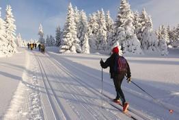 Supraśl Atrakcja Wypożyczalnia nart biegowych MOKOL